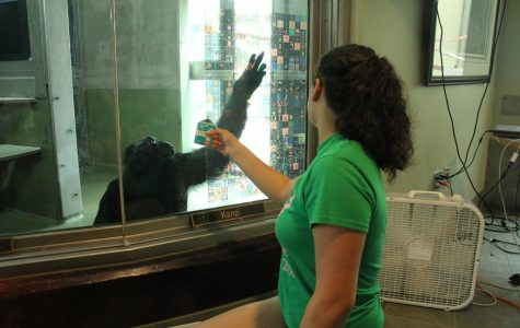Ape Initiative: an unknown asset to Des Moines is pretty relative; support it